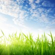 Grass and cloudy sky — Stock Photo #4492947