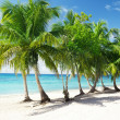 Caribbean sea and coconut palms — Stock Photo #4493007