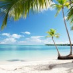 Caribbean sea and coconut palms — Stock Photo