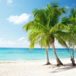 Caribbean sea and coconut palms - Stok fotoraf