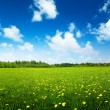 Field of spring flowers and perfect sky — Stock Photo