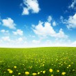 Stock Photo: Field of spring flowers and perfect sky