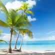 Caribbean sea and coconut palms - Stockfoto