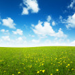 Field of spring flowers and perfect sky — Stock Photo #4493118
