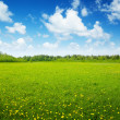 Field of spring flowers and perfect sky — Stock Photo #4493119