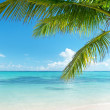 Ocean and coconut palms — Stock Photo