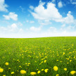 Field of spring flowers and perfect sky — Stock Photo #4493403