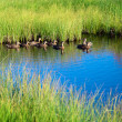 Ducks in water of mountain lake - Stock Photo