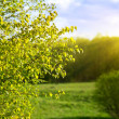 Sunset in spring forest - Stock Photo