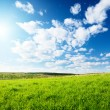 Green field of grass - Stock Photo