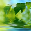 Leaves of birch and water — Stock Photo