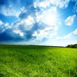 Стоковое фото: Spring day and green field