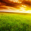 Stock Photo: Field of grass and sunset