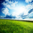 Field of spring grass and sun — Stock Photo