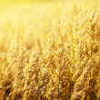 Royalty-Free Stock Photo: Yellow autumn grass and sunset