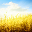 Yellow autumn grass and sunset — Stock Photo