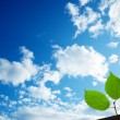 Green leaves under sky — Stock Photo #4494061