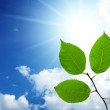 Green leaves under sky — Stock Photo