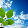 Green leaves under sky — Stock Photo #4494133