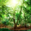 Stock Photo: River in deep forest