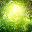 Sunny day in deep forest -  