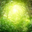 Sunny day in deep forest — Stock Photo #4494315