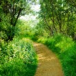 Road in deep forest — Stock Photo
