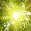 Stock Photo: Sun in deep forest