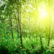 Sun in deep forest - 图库照片