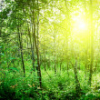 Sun in deep forest - Stockfoto