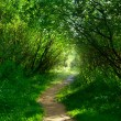 Stock Photo: Ground road in summer green forest