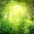 güneşli bir günde derin orman — Stok fotoğraf