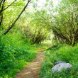 Ground road in summer green forest - 图库照片