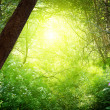 Sun in deep forest — 图库照片