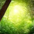 güneşin altında derin orman — Stok fotoğraf