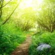 Ground road in summer green forest — Stock Photo