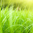 Spring grass and sunlight - Stok fotoraf