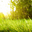 Grass in park — Stock Photo