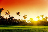 Sunset and tropical trees — Stock Photo