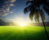 поле травы и ладони — Стоковое фото