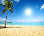 Sea and coconut palm — Stockfoto