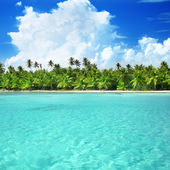 Palms and caribbean sea — Stock Photo