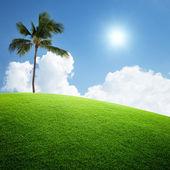 Palm på fältet — Stockfoto