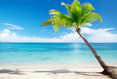 Caribbean sea and coconut palm — Stock Photo