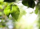 森林における葉 — ストック写真