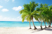Caribbean sea and coconut palms — Foto Stock