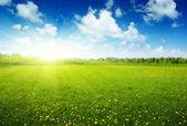 Campo de flores da primavera e céu perfeito — Fotografia Stock