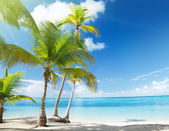 Caribbean sea and coconut palms — Stockfoto