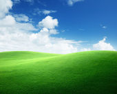 Field of green grass and blue sky — Stock Photo