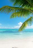 Havet och kokos palmer — Stockfoto
